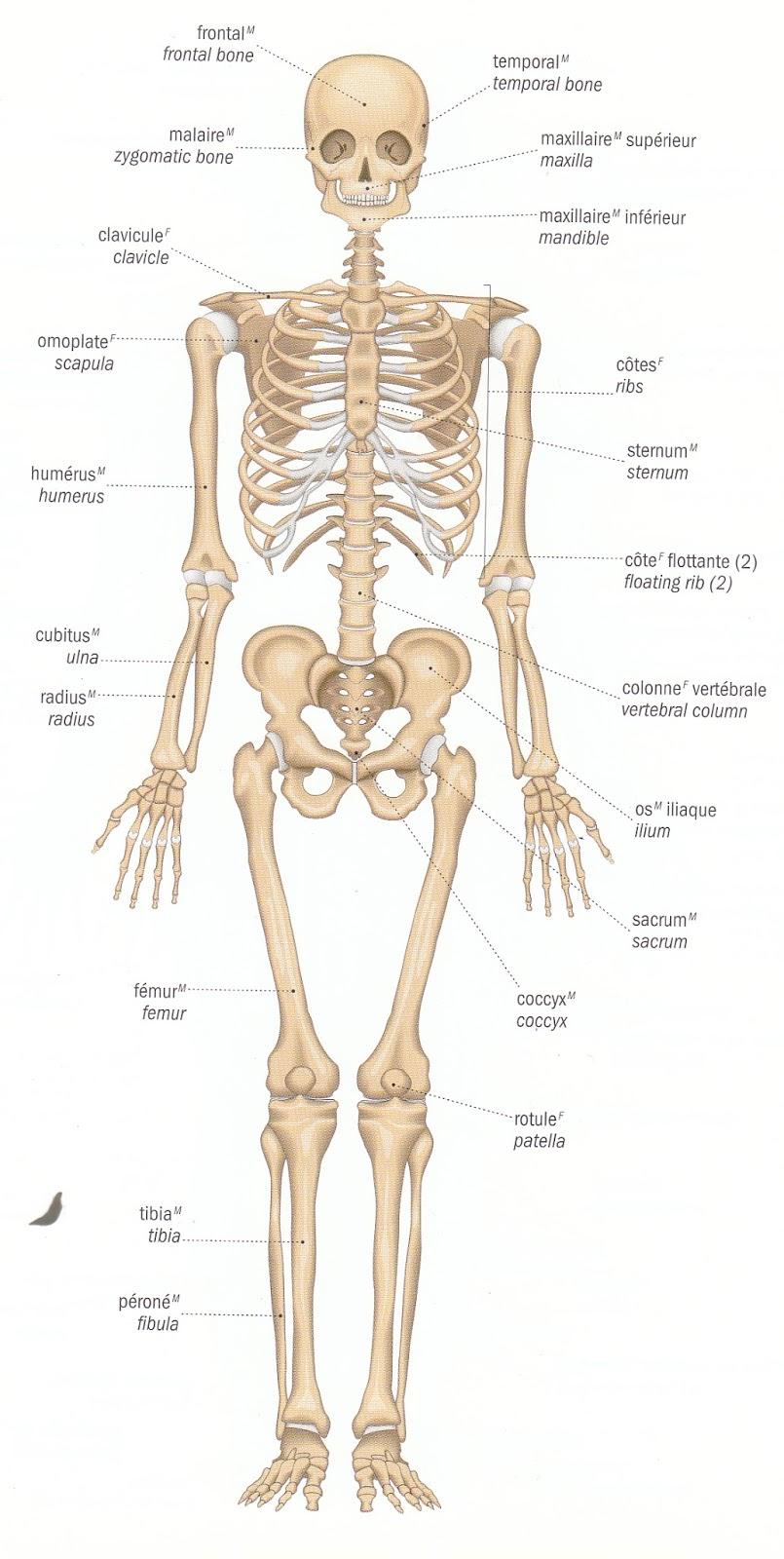 Winter 2017- Advanced Anatomy // hiver 2017- Étude anatomique ...