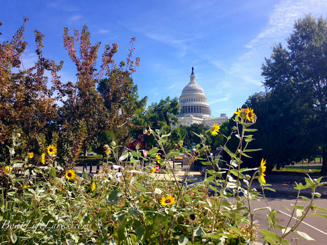 Capitol, Washington, D.C. from the Botanic Garden