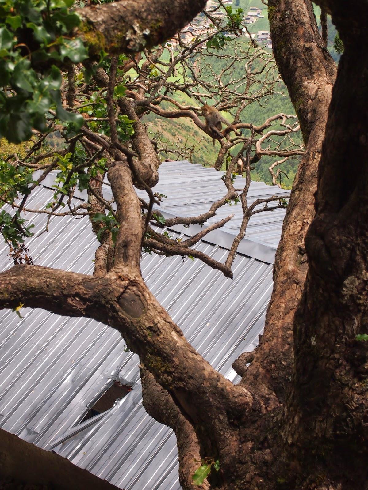 Monkeys in twisted trees