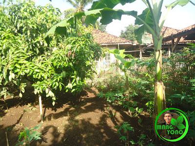 Tanaman di kebun belakang rumah