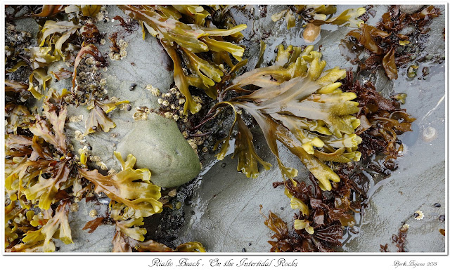 Rialto Beach: On the Intertidal Rocks