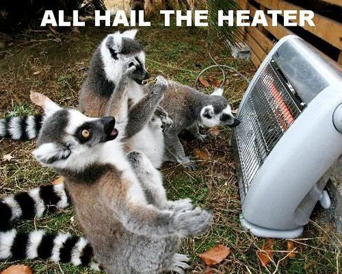 Cute And Funny Pictures And More Ring Tailed Lemurs And The Heater