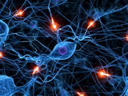 https://sites.google.com/site/almacendearticulos4/Neuropsicolog%C3%ADa%20de%20las%20praxias%20y%20procesos.pdf?attredirects=0&d=1