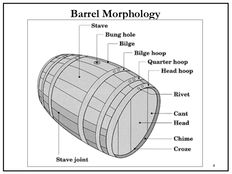 Enoviti Oak Barrel Morphology