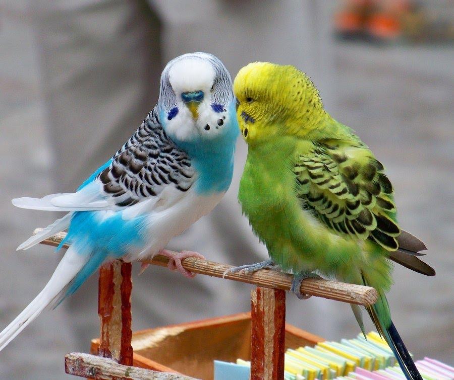 Best Birds to Breed with Price List India ~ Birds Breeding