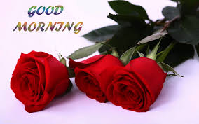 Best good morning photos wallpaper with red rose
