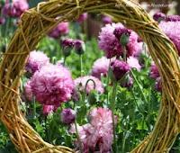 DIY Willow Wreath