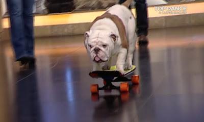 Otto, el perro en monopatín que enamora a media España | Vídeo