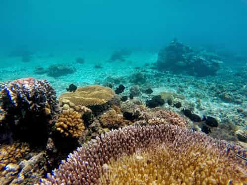 Coral Diving in Apo Reef