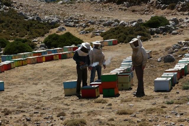 Εσείς πόσο δίνετε το κιλό το μέλι; Ψηφοφορία για όλους τους μελισσοκόμους!