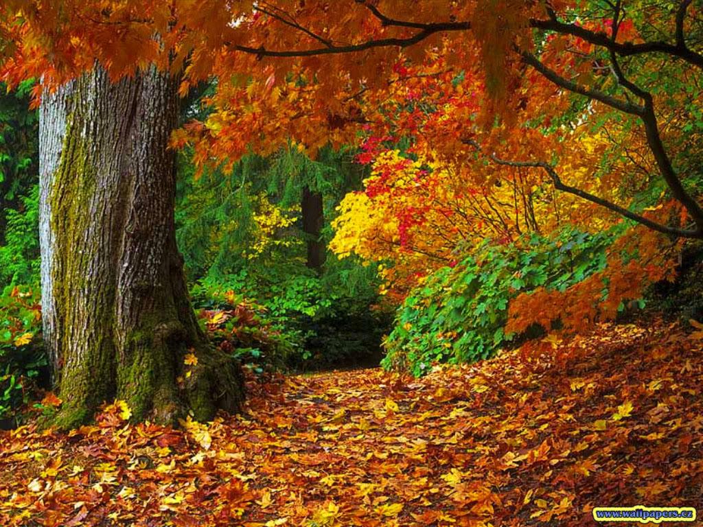 Debz Ramblings: Fall Season