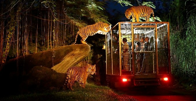 Bali Safari and Marine Park - Bali, Holidays, Tours, Attractions, Zoo Park