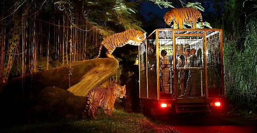 9 Famous zoo packages that most hunted at Bali Safari Marine Park