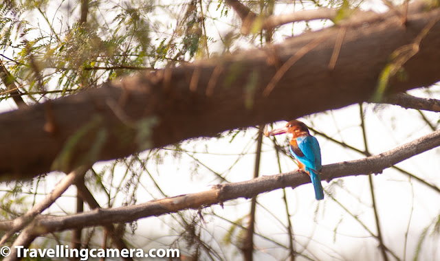 Sorry for bad quality of photographs, as all of these are cropped versions from long distance shots. We noticed few Kingfishers around us and could capture one of them sitting on the long grass around water ponds. The whole Eco-system inside Okhla Bird Sanctuary kept us involved through one or other way. After a while we parked our car on the other extreme. There is a huge tree with few rooms inside the sanctuary, where we could park the car. From this point, we had two options to reach two different watch-towers.