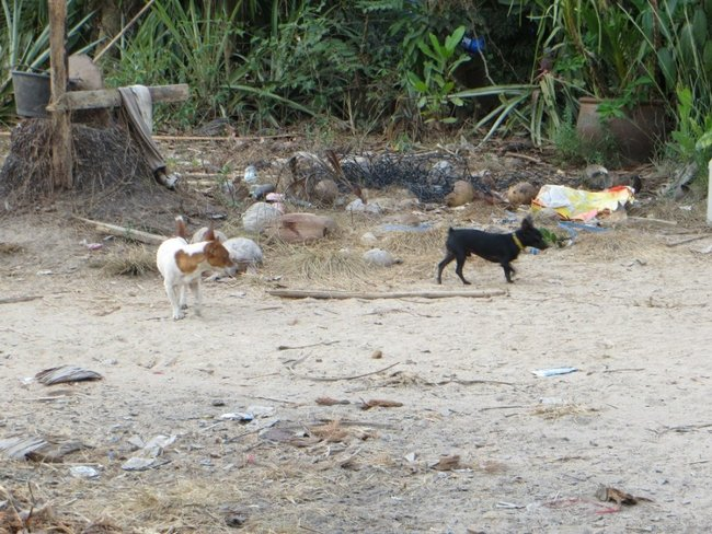мелкие злые собаки