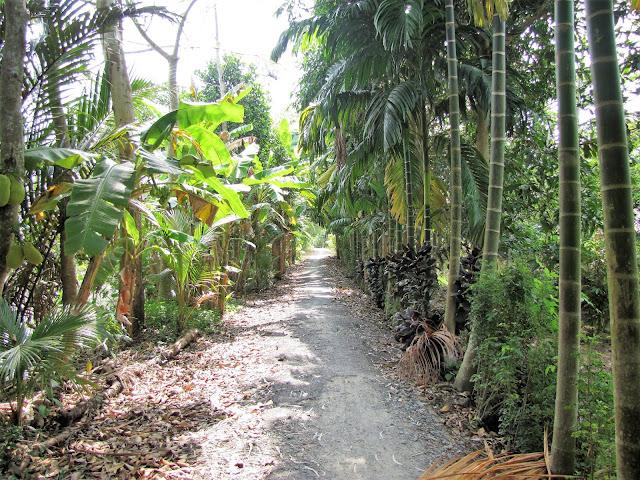 trail along mekong delta vietnam