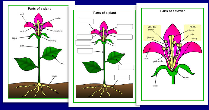 diagram of a corn picker parts diagram of where are the parts of a plant mommy magic!: outdoor adventures: a trip to the nursery by ...