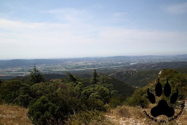 panorama-vallee-durance-foret-cedres-petit-luberon