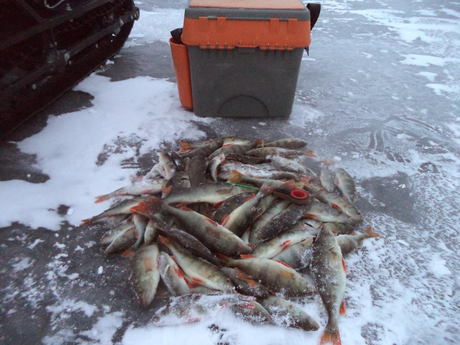 Рыбная ловля в вологодской области