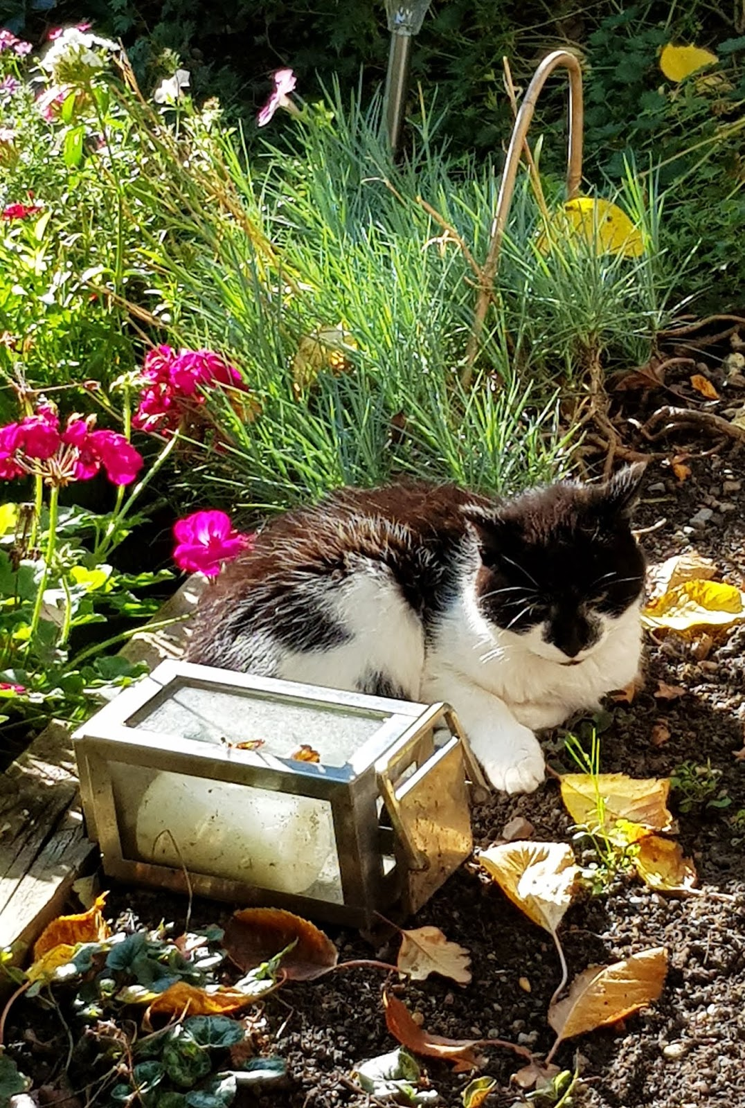 Molly the cat lazing on a warm October day. Is This Mutton's sentence a day for October.