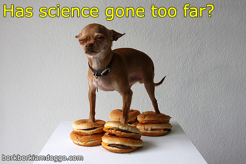 Doggos - Has Science Gone Too Far?