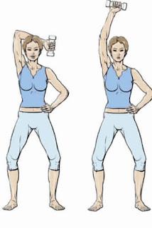 Biceps et triceps en action