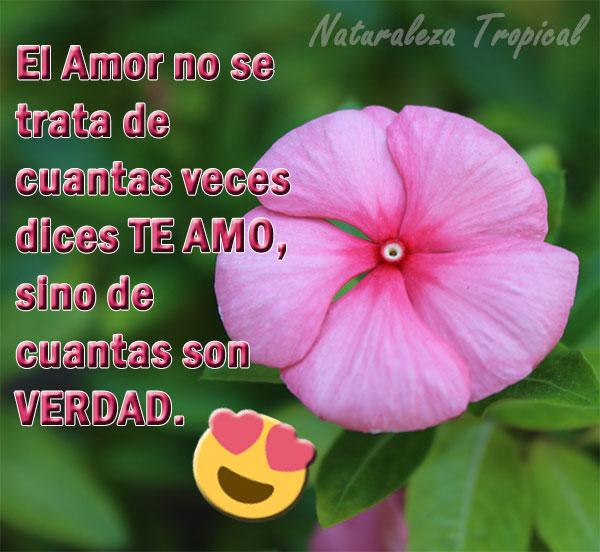 El Amor no se trata de cuantas veces dices TE AMO, sino de cuantas son verdad.