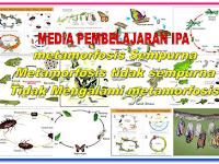 Proses Metamorfosis pada hewan disertai media pembelajarannya