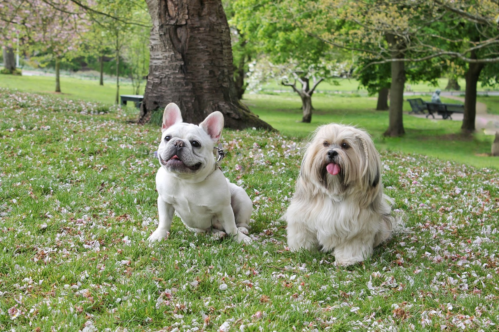 Dog Park Brampton