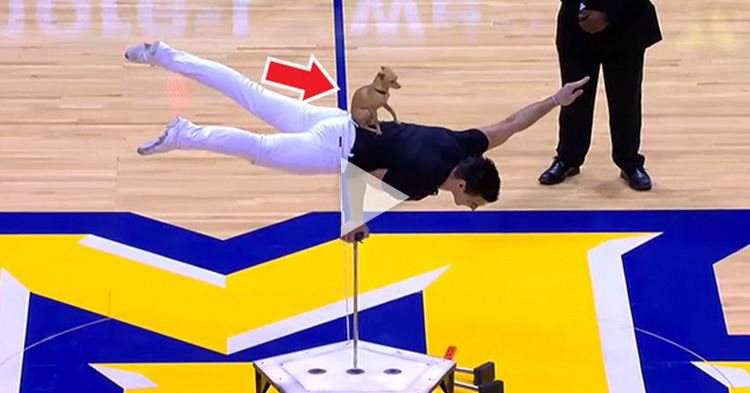 Watch this tiny Dog showing off some tricks at halftime show
