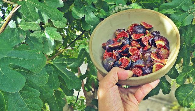 Drzewo figowe, świeże figi, przetwory