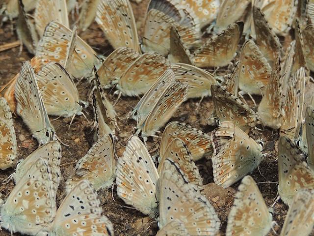 las mariposas libansales minerales suelo