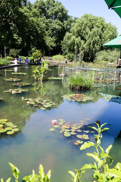Seerosenteich im Luisenpark Mannheim