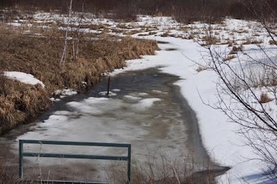 local ponds slowly thaw