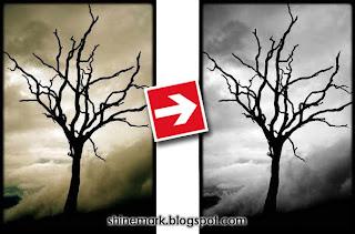 death%2Btree-black-and-white-photo-by-saimoom-shinemark