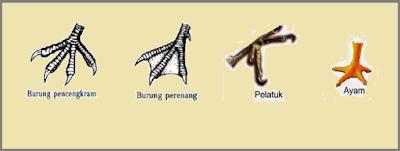 adaptasi burung pada bentuk kaki