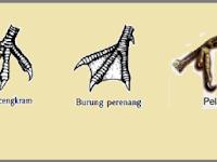 Macam Macam Bentuk Adaptasi Burung