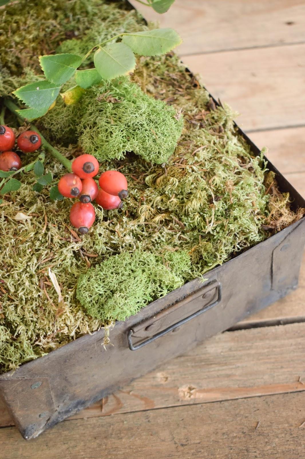 Herbstliche Deko für den Tisch, Sideboard und Konsole. Dekoidee mit Moos, Hagebutte decoration