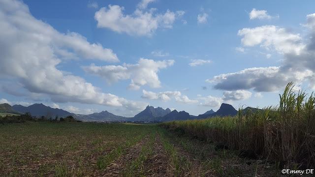 Sugarcane ~ Mauritius by ©Emmy DE