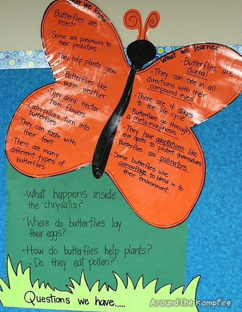 Butterfly life cycle KWL anchor chart