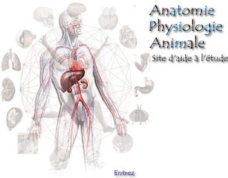 "Cours physiologie animale biologie ""svi s4"" PDF"