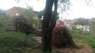 Ventos fortes durante chuva derruba árvore sobre casa e quase causa acidente no interior da PB