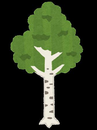 白樺の木のイラスト