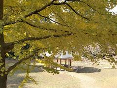 葛原岡神社の黄葉