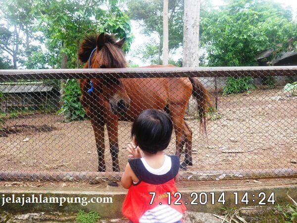 kuda di bumi kedaton resort
