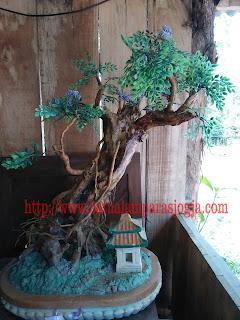bonsai replika