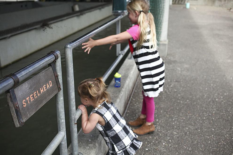Kids feeding the fish at the Lake Sonoma Fish Hatchery