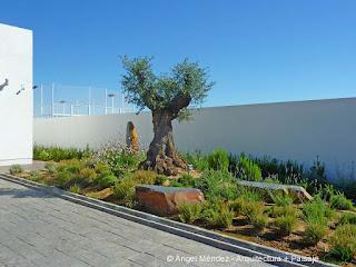 monolitos de pizarra, rocas jardín, olivo paisajismo, rocas ornamentales