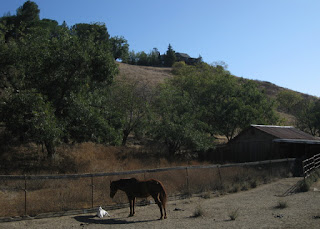 Horse and young billygoat, Shannon Road, Los Gatos, California