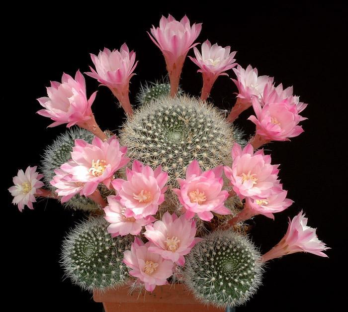 Цветок притягивающий деньги фото